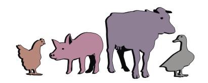 Pasze dla bydła, trzody i drobiu